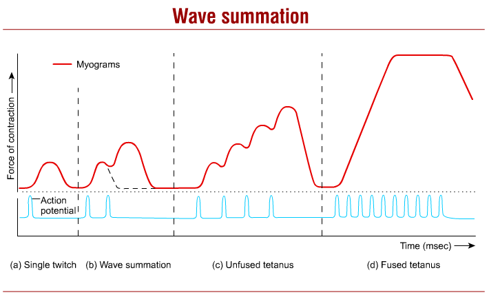 what is wave summation
